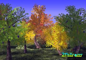 21strom-apple-pear-plum-trees2