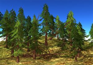 21strom-Spruce-tree00