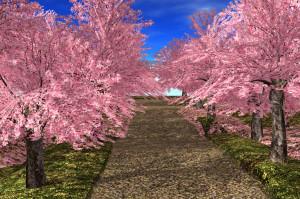 21strom Cherry Tree Park 04
