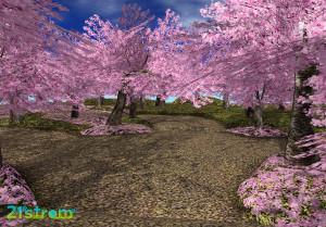 21strom-cherry-blossom-park01