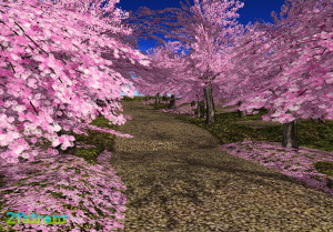 21strom-cherry-blossom-park06