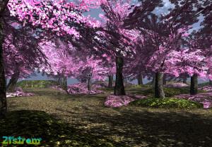 21strom-cherry-blossom-park08