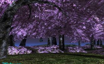 21strom-cherry-blossom-park09