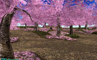 21strom-cherry-blossom-park10
