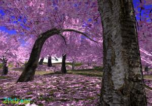 21strom-cherry-blossom-park11
