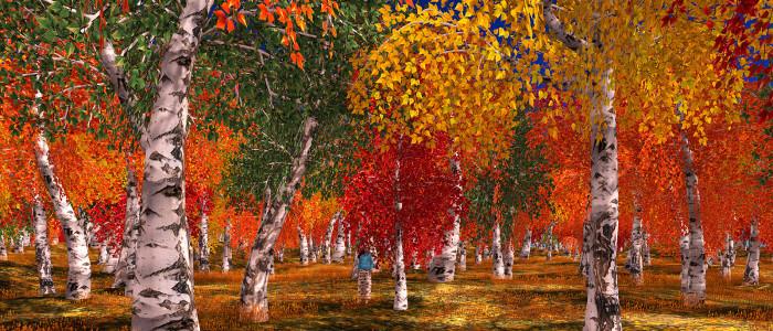 WhiteBirchTreeForest-Autumn1