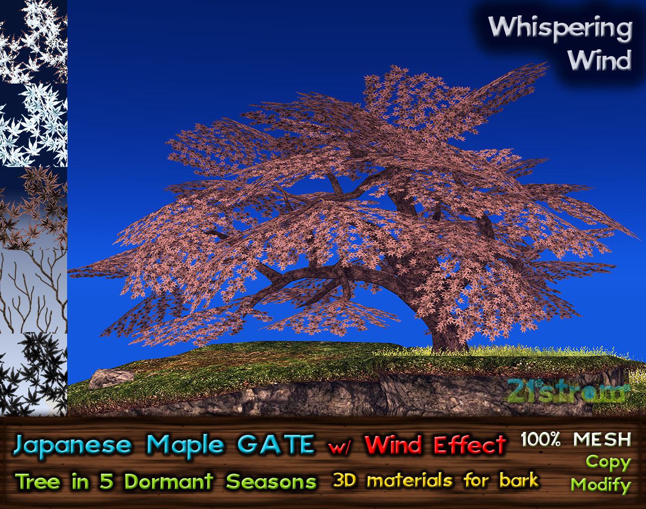 JapaneseMaple-GATE-Dormant01