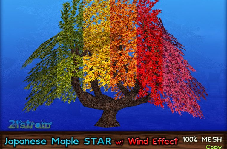 JapaneseMaple-STAR-Color04