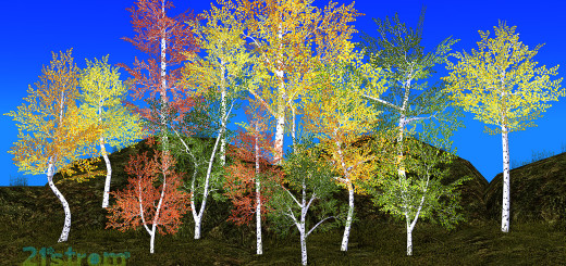 Aspen Trees - Color Seasons